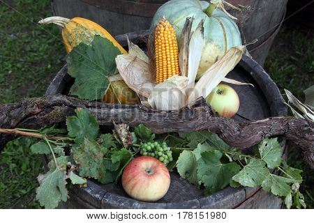 SCITARJEVO, CROATIA - SEPTEMBER 15: Garden harvest of homegrown produce, exposed at the event Dionysius ceremony in Scitarjevo, Croatia, September 15, 2013.