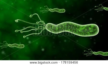Helicobacter Pylori 3D Illustration, Close-up Stomach Ulcer Bacteria, Stomach Gastrit Bacteria, Stomach Cancer, Stomach Disease