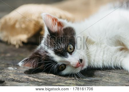 Cute Kitten Cat Lying On Wooden Board