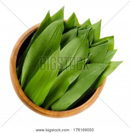 Ramsons in wooden bowl. Fresh leaves of Allium ursinum, also called buckrams, wild garlic or bear leek. Wild relative of chives native to Europe and Asia. Macro food photo close up on white background