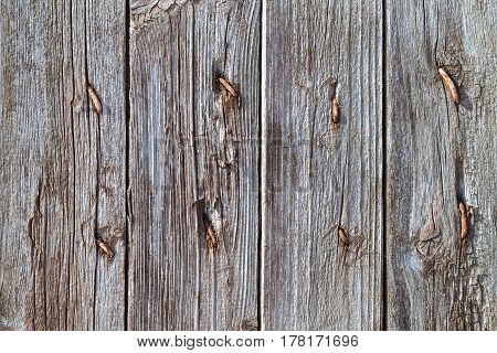 Grey Old Rotten Boards With Rusty Nails.