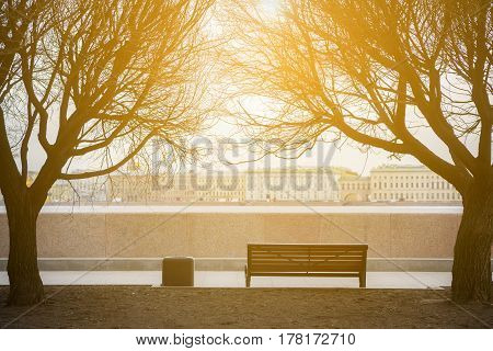 classic bench on under the trees in saint-petersburg.