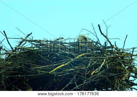 Nest of storks in village on a background of the blue sky
