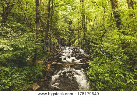 Creek In Lush, Green Forest