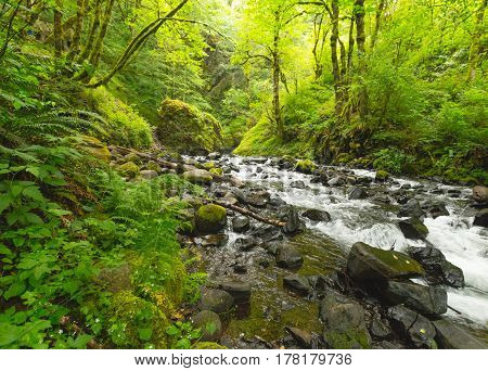 Rocky Creek In Lush, Green Forest
