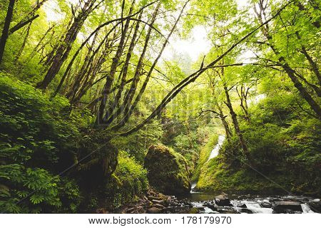 Creek flowing through a lush forest in the Columbia River Gorge Oregon USA.