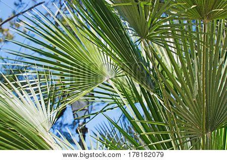 Green Sunlit Palm Leaf