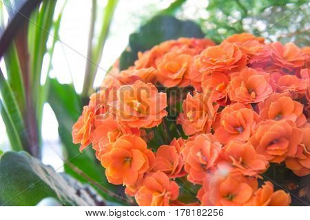 ikebana with Kalanchoe with orange flowers and green leaves and another herb in the basket as a gift