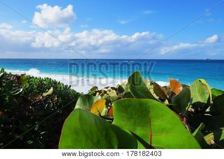 A beautiful view of the ocean, a cruise ship, and big leaves bushes during a bright sunny day. New Providence, Nassau, Bahamas.