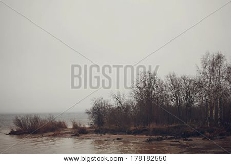 The wetland shore of the lake in cloudy weather
