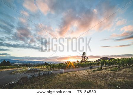 Colorful Vineyard Sunset