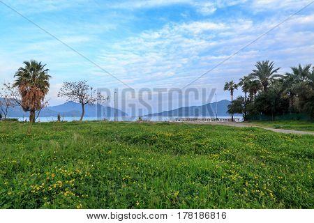 Spring flowers close to marmaris beach with palm trees in Marmaris Turkey