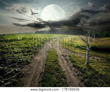 Dry tree near country road under fool moon. Elements of this image furnished by NASA