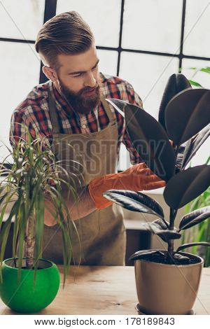 Vertical Portrait Of Young Handsome Bearded Gardener Cleaning Flowers From Dust