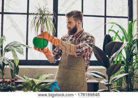 Horizontal Photo Of Bearded Young Man Examining And Working With Plants And Flowers