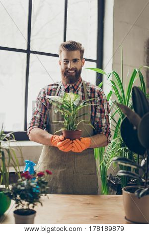 Vertical Portrait Of Young Handsome Bearded Smiling Happy Florist Holding Plant In His Hands