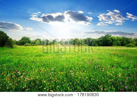 Field flowers on a beautiful spring meadow