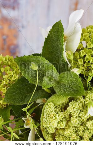Close-up of various fresh spring flowers with water drops on old wooden background