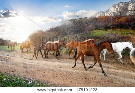 Herd of horses running on the road in mountains