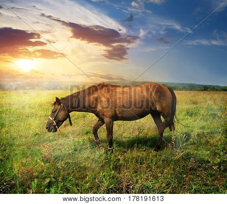 Beautiful horse on a pasture at sunrise