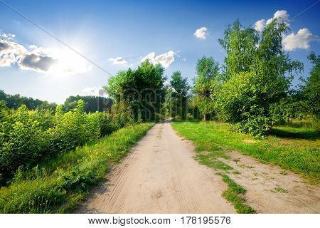 Country road and green trees in countryside