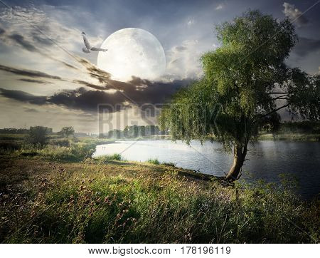 Willow near river and bird under full moon. Elements of this image furnished by NASA
