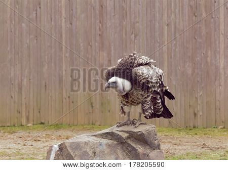 A big bird standing on a large stone.