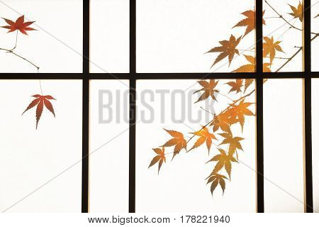 Shadow of autumn maple leaves through a paper sliding door