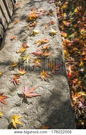 Autumn maple fallen leaves on rectangle stone