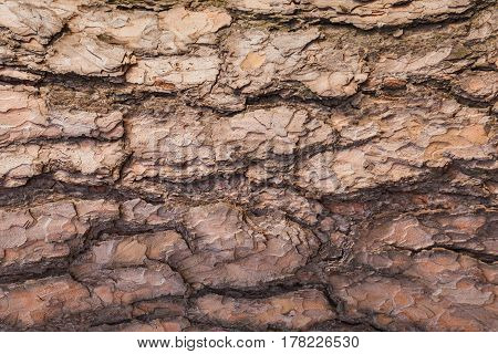 The texture background of a bark on a tree. horizontal close-up shot.