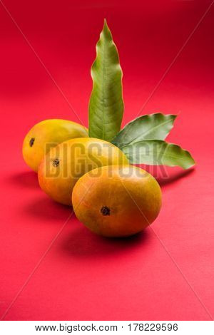 King of fruits; Alphonso yellow Mango fruit duo with stems and green leaf isolated over colourful background, a product of Konkan from Maharashtra - India