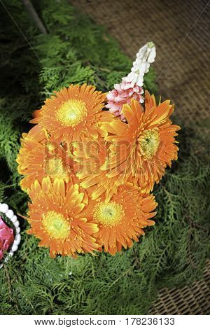 Gerbera jamesonii is a species of flowering plant in the genus Gerbera. It is indigenous to South Eastern Africa and commonly known as the Barberton daisy the Transvaal daisyand as Barbertonse madeliefie in Afrikaans. This plant produces tall colorful flo