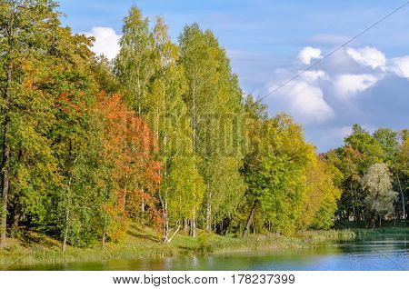 Wall autumn forest on the lake at the Gatchina Palace Park