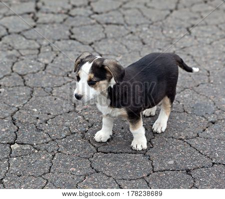 Lonely sad puppy on cracked ground. Homeless animals.