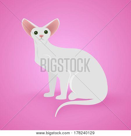 White Sitting Cat on pinck background. Vector Illustration.