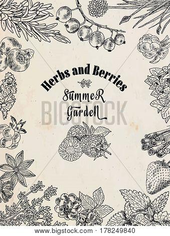 herbs and berries summer garden, food set illustration on the vintage background