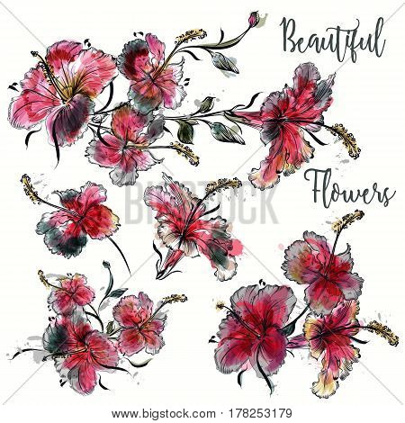 Set of vector hibiscus flowers in watercolor style for design
