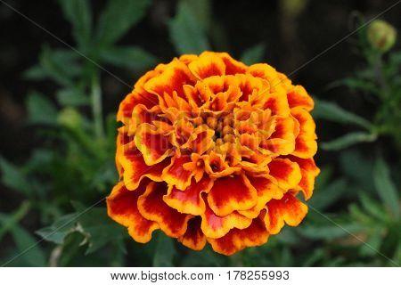gelb yellow orange Blume flower Pflanze plant blühen Frühling spring grün green Botanischer Garten botanical garden