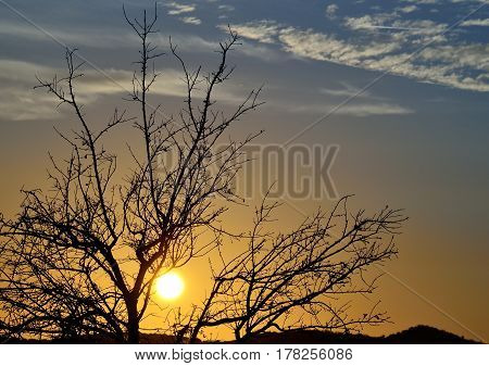 Colorful sunrise with beautiful sky and autumnal tree backlit
