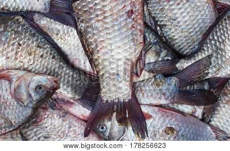 Fish crucian carp, food background with fresh products