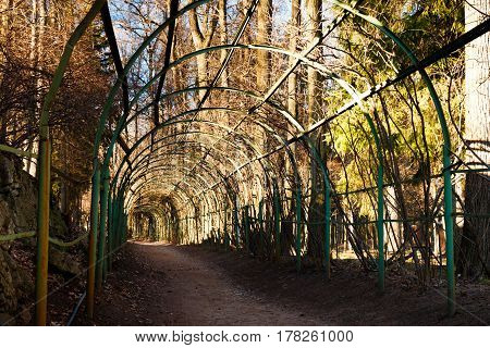 Green wooden arcade in estate park. Arkhangelskoe country seat, Russia. Spring Park, lit by the setting sun