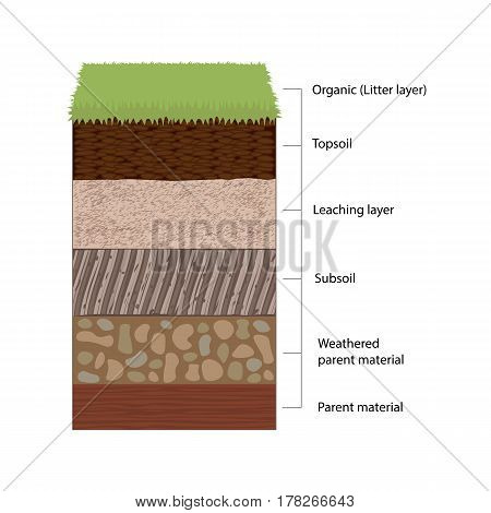 Soil horizons are distinct layers of soil. Vector illustration flat design
