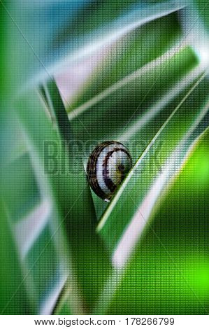 Macro image of snail on yuca palm leaf