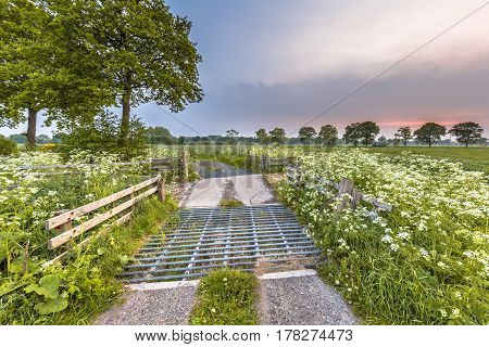 Cattle Grid Decorated With Cow Parsley Flower