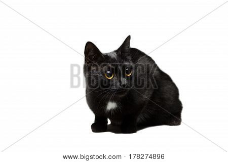 Black cat young cat without breed isolated on white