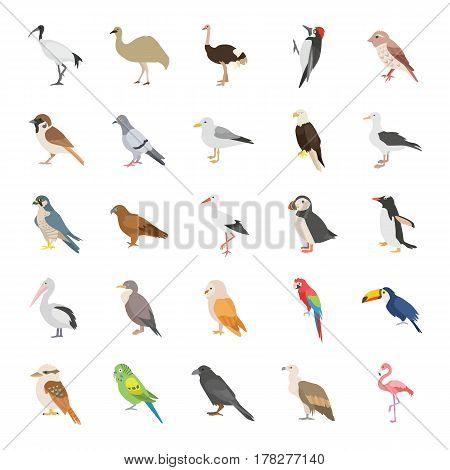 25 Birds color vector icons collection set