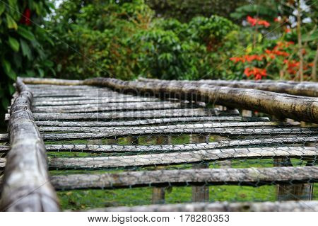 Bamboo raised beds for drying coffee in Boquete Panama
