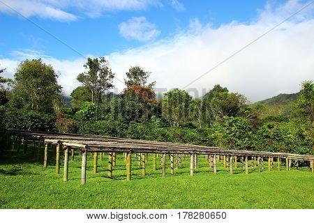 A coffee farm in Boquete Panama, green, sky