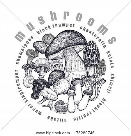 Mushrooms in circle. Template of signboard poster cover. Bolete Morel Truffle Shimeji Champignon Chanterelle Black Trumpet King Trumpet. Black white. Vector illustration vintage engraving