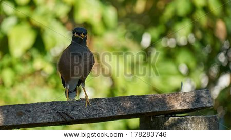 Exotic Bird sitting on crossbar in Phuket